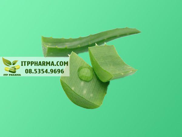 Hình ảnh nha đam - thành phần của Hemoclin gel