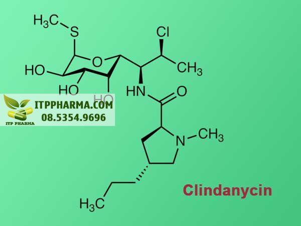 Clindanycin- Thành phần chính trong T3 Mycin