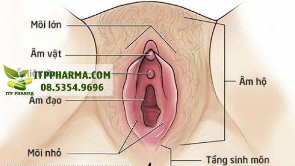 Cấu tạo âm đạo của phụ nữ