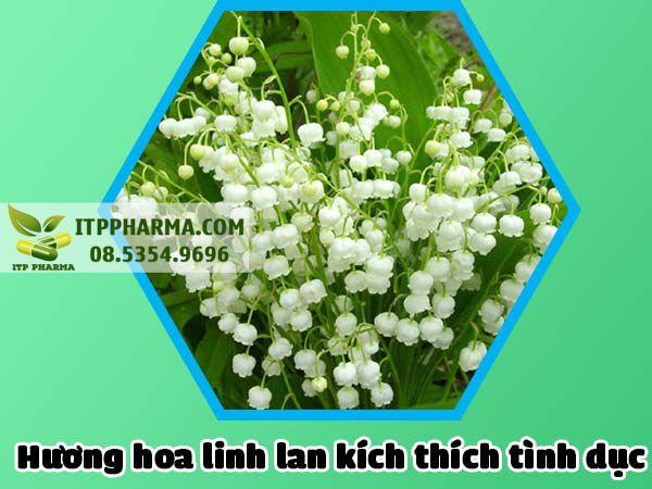 Hương hoa Linh lan tăng cường hưng phấn
