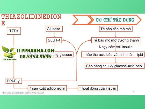 Cơ chế tác dụng của thuốc Thiazolidindione