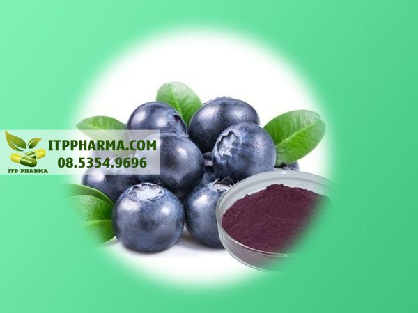 Blueberry Extract - Thành phần có trong Otiv