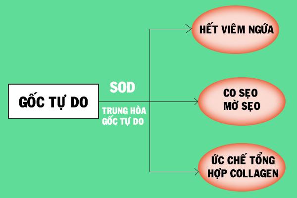 Vai trò của SOD trong Sodermix