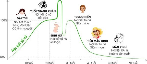 Biểu đồ biến động nội tiết tố nữ theo độ tuổi