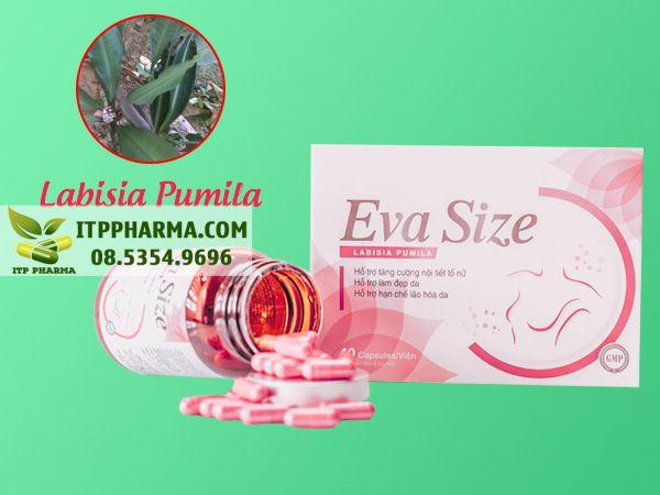 Eva Size chưa thành phần Labisia Pumila - Nữ hoàng thảo dược