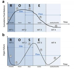 Hình 5: Các giai đoạn dịch truyền khác nhau trong quá trình sốc.