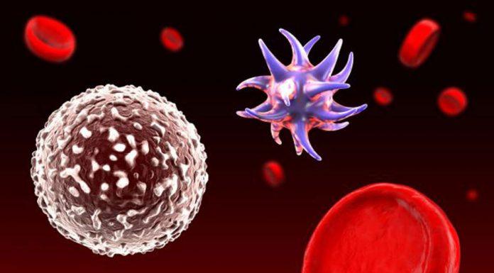 Nguyên tắc xử trí và quản lý dịch truyền trong sốc nhiễm trùng