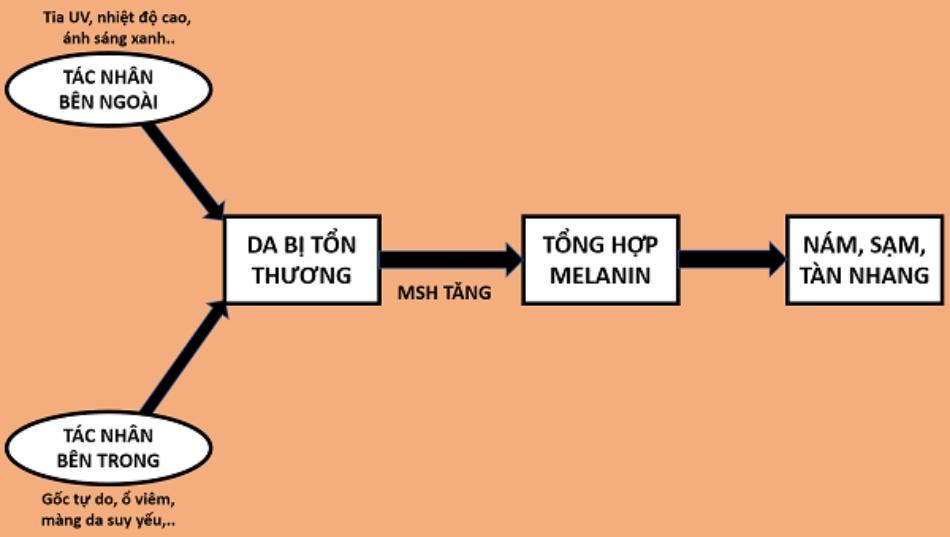 Cơ chế hoạt động của Tranacix