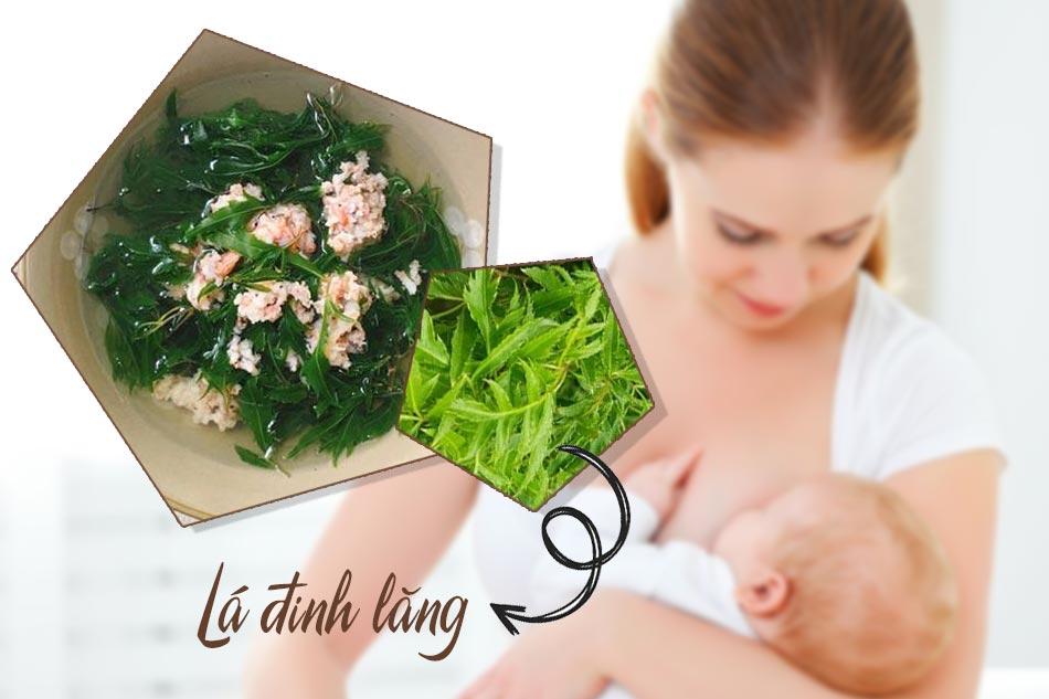 Canh lá đinh lăng trị mất sữa sau sinh hiệu quả