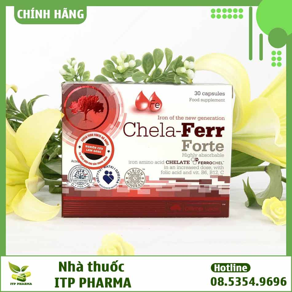 Chela Ferr Forte được bán ở đâu?