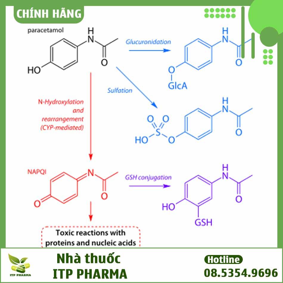 Cơ chế gây tương tác thuốc của thành phần Paracetamol trong thuốc Philduocet