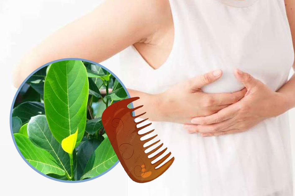 Phương pháp chải ngực với lá mít giúp gọi sữa về